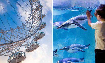 London Eye Kombi-Ticket mit Aquarium