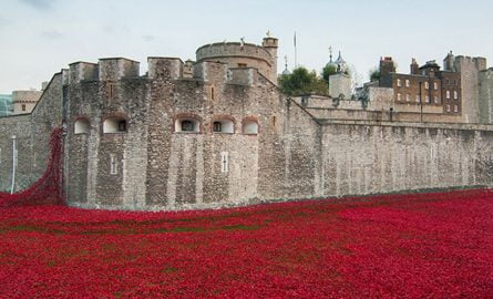 Tower of London Mohnblumen